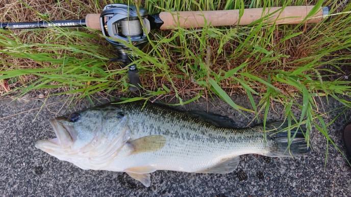 スティーズATWで釣り上げたBASS