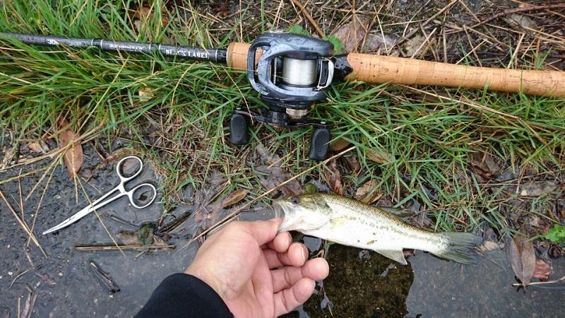 琵琶湖 矢橋帰帆島周辺雨の日1日で釣りあげた記録
