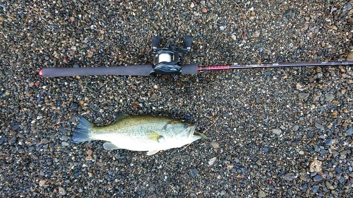 ハートランド疾風七伍とジリオン TW HLC 1516SHLで釣れたBASS
