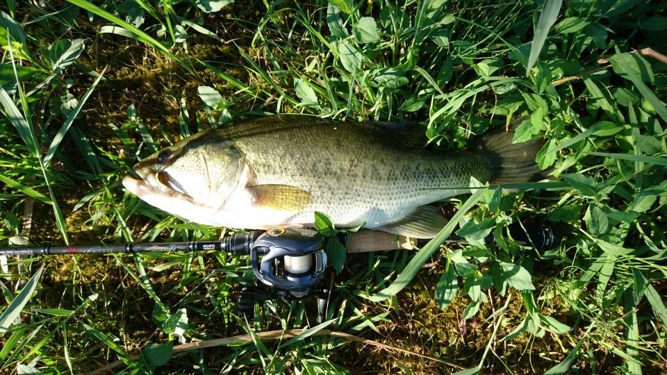 フロロライン8lbで釣り上げたBASS