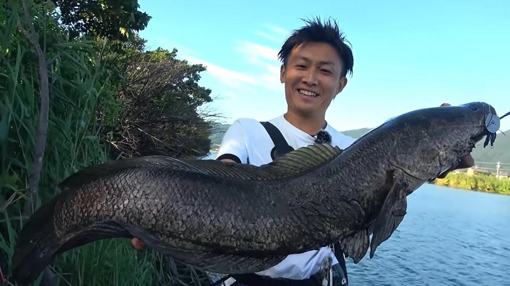 84㎝の雷魚をハートランド フォールトラップ テクニカルシャフト7102HRB-AGS15 で赤松健さんが釣り上げました。