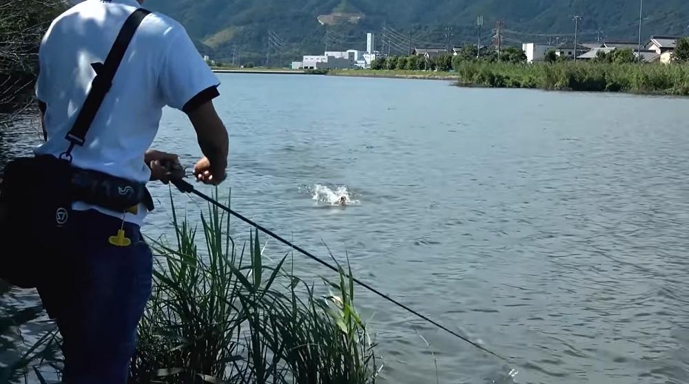 赤松健さんハートランド フォールトラップ テクニカルシャフトでBASSを水上スキーの用に巻きよせる